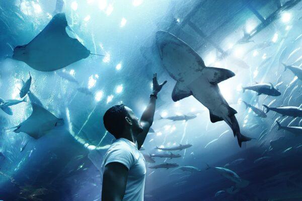 aquarium underwater